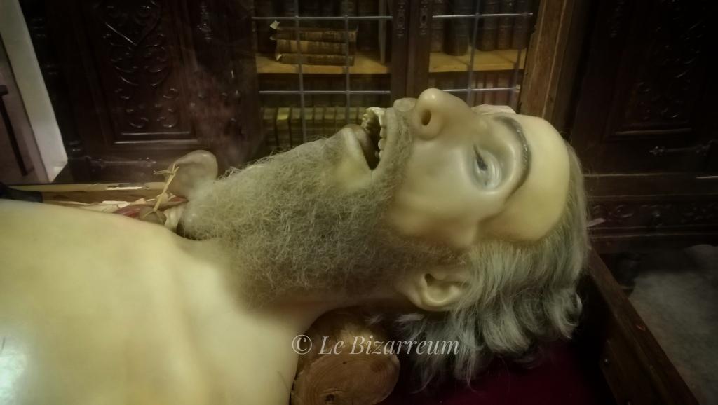 Cire anatomique Musée Testut Latarjet.